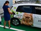 Obrázek: Nabíjecí stanice pro elektromobily od MONETA Money Bank