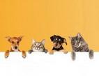 Obrázek: Pojištění pro psy a kočky
