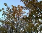 Obrázek: Podzim - stromy