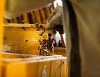 Obrázek: Včely
