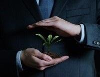 Obrázek: Rostlina vruce
